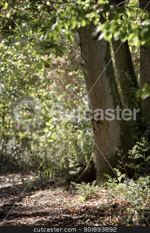 Forest path stock photo, Forest path by photography33