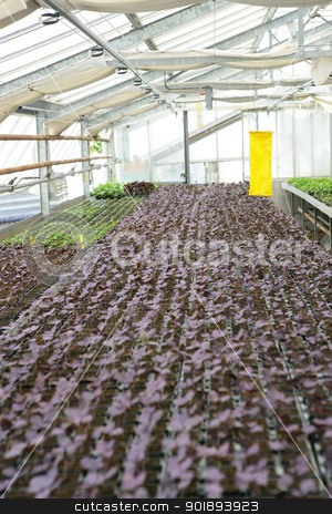 Young nursery plants stock photo, Young nursery plants by photography33