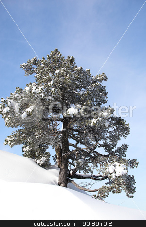 Snowy hill stock photo, Snowy hill by photography33