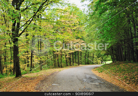 Autumn road stock photo, Empty road winding through early autumn forest by zagart