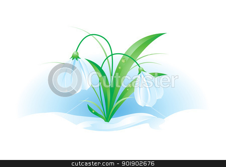 Snowdrops stock photo, Illustration of snowdrops on white background for design by dvarg