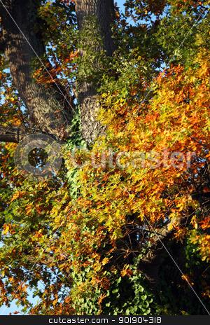 Tree stock photo, Tree by photography33