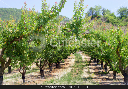 vineyard stock photo, vineyard by photography33