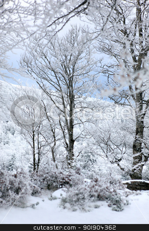 Winter stock photo, Winter by photography33