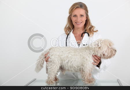Vet and dog stock photo, Vet and dog by photography33