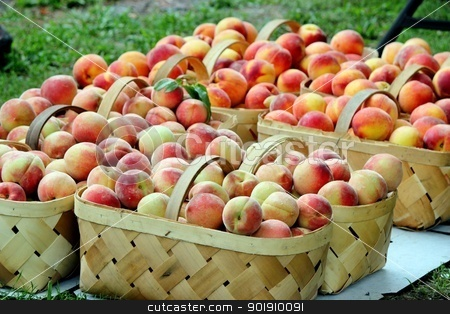 Baskets of peaches 3 stock photo, Wicker baskets filled with fresh, ripe peaches by Cathy Locklear