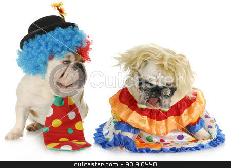 funny clowns stock photo, dog clowns - male and female english bulldog clowns on white background by John McAllister