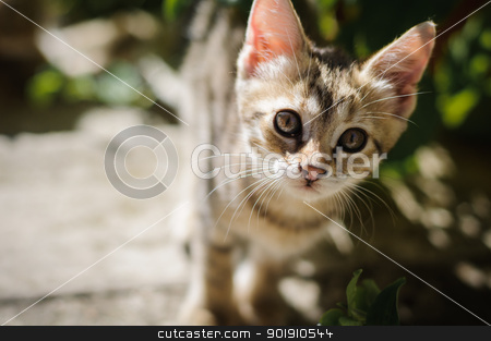 Small kitten outdoors stock photo, Little kitten playing in the garden close up by nvelichko