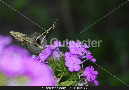 butterfly on a flower stock photo, butterfly on a flower by John McAllister
