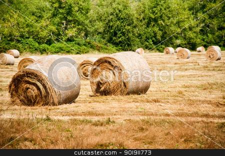 Hay bales stock photo, Bales of hay in a field by Jaime Pharr