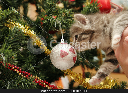 Christmas Kitten stock photo, Cute grey tabby kitten investigating the Christmas tree by suemack