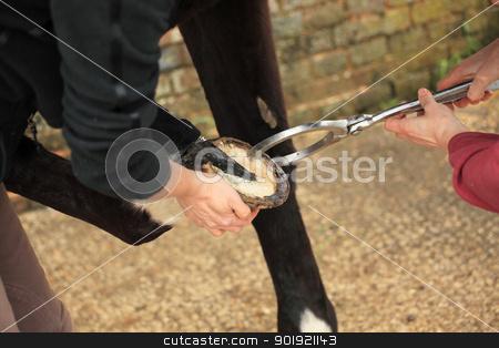 horse hoof stock photo, horse hoof by Chretien