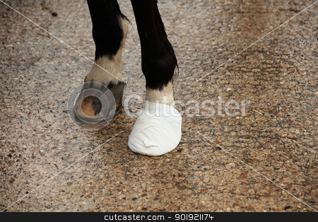 bandage on a horse hoof stock photo, bandage on a horse hoof by Chretien