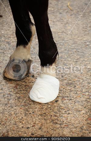bandage on a horse hoof stock photo, bandage on a horse hoof by Chretien