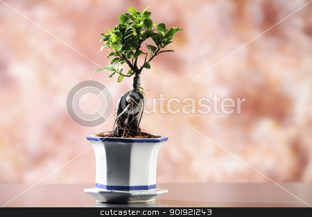 bonsai stock photo, close up of the bonsai  with background by eskaylim