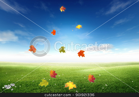 Autumn stock photo, Yellow and red leaves are isolated on sky background by Diana