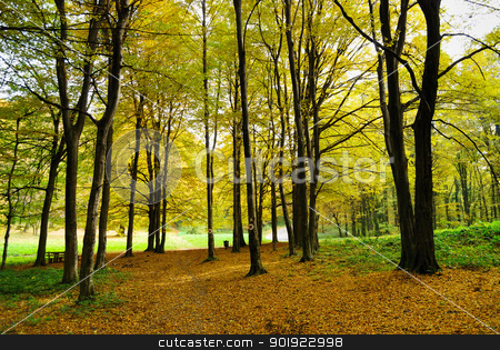 Early Autumn in Forest stock photo, Walking Path through Early Autumn Forest with Fall Color Leaves by zagart