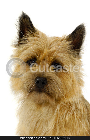 Dog face stock photo, Sweet Sad dog face on a white background by Lars Christensen