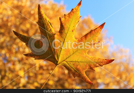 Autumn Leaf stock photo, Autumn leaf with orange fall colors in background by Niloo