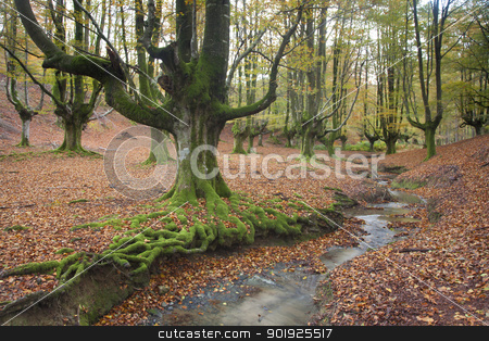 Wood of Otzarreta in autumn, Gorbeia, Alava, Spain stock photo, Wood of Otzarreta in autumn, Gorbeia, Alava, Spain by B.F.