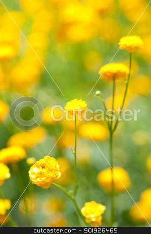 Yellow flowers stock photo, Close up from a yellow flowers by Picturehunter