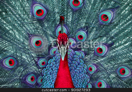 Distorted Peacock stock photo, A peacock's colors are distorted. by Joe Tabb