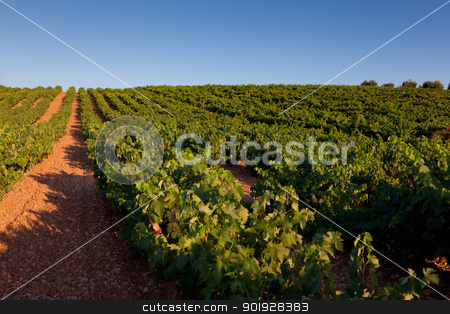 Vineyard in Najera, La Rioja, Spain stock photo, Vineyard in Najera, La Rioja, Spain by B.F.