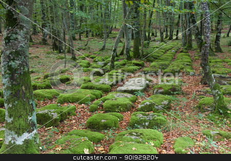 Santiago forest, Alava, Spain stock photo, Santiago forest, Alava, Spain by B.F.