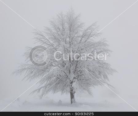 Tree snow covered in Opakua, Alava, Spain stock photo, Tree snow covered in Opakua, Alava, Spain by B.F.
