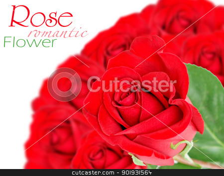 Red rose with leaves isolated on white stock photo, Red rose with leaves isolated on white by Vitaliy Pakhnyushchyy