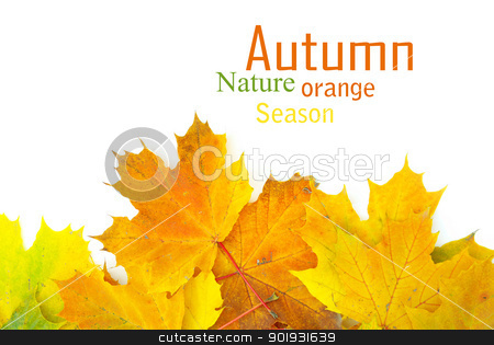 autumn leafs stock photo, autumn maple leaves isolated on a white by Vitaliy Pakhnyushchyy