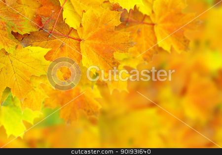 autumn leafs stock photo, autumn maple leaves with selective focus by Vitaliy Pakhnyushchyy
