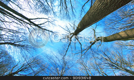 winter forest  stock photo, beautiful winter forest  and sky by Vitaliy Pakhnyushchyy