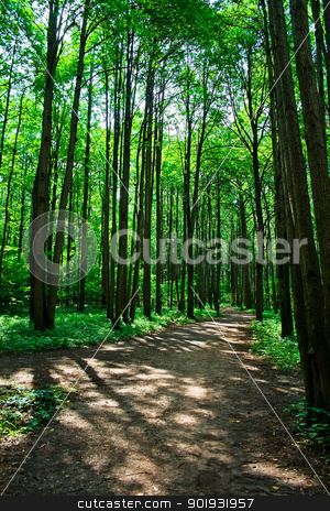 green forest stock photo, Beautiful road in the green summer forest, Moscow by Alexey Popov