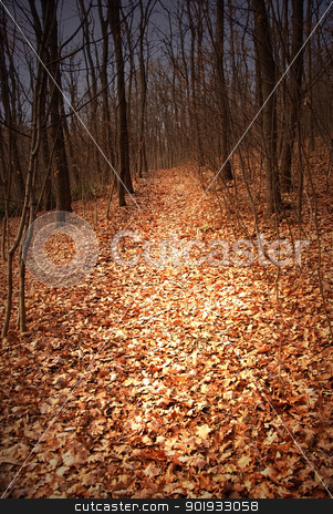Autumn forest path stock photo, autumn forest path between black leafless trees by Julija Sapic