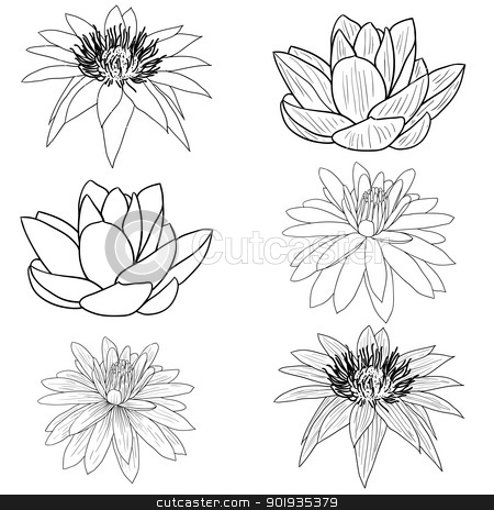 Oriental lotus - a flower  stock photo, Oriental lotus - a flower Vector illustration. by aarrows