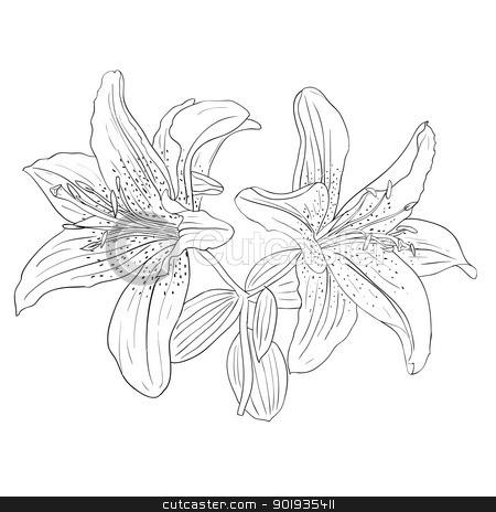 Beautiful flowers on a white background drawn by hand stock photo, Beautiful flowers on a white background drawn by hand , vector illustration by aarrows