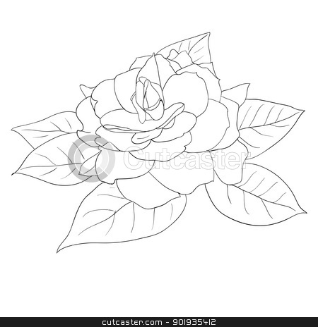 Beautiful flowers roses on a white background drawn by hand stock photo, Beautiful flowers roses on a white background drawn by hand , vector illustration by aarrows
