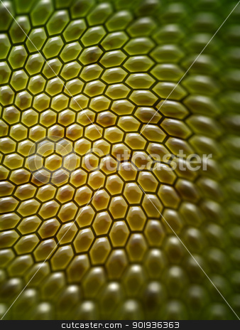 honey background stock photo, An image of a nice abstract honey comb background by Markus Gann