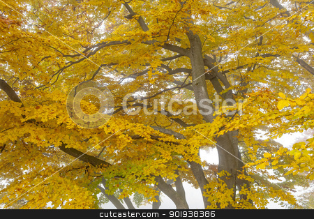 autumn leaf stock photo, An image of a nice autumn leaf background by Markus Gann