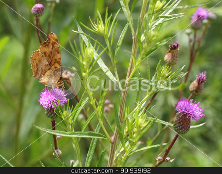 butterfly on pink flower on green leaf stock photo,  butterfly on pink flower on green leaf by aarrows