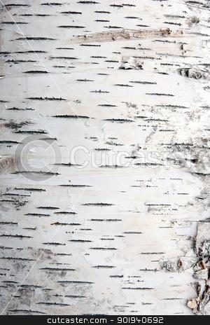 bark of birch in the cracks texture stock photo, bark of birch in the cracks texture by aarrows