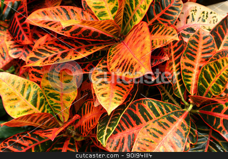 Plant background stock photo, A Colorful plant background image by Jim Mills