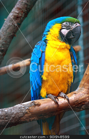 parrot stock photo, Beautiful parrot on a branch by Oleksandr Pakhay