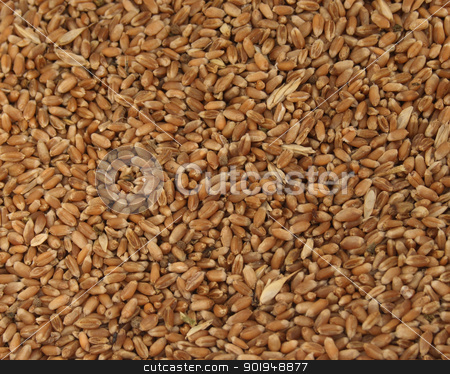 grain stock photo, Grain of wheat        by Oleksandr Pakhay