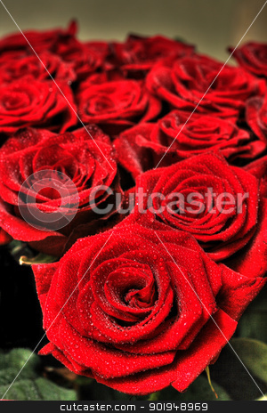 rosa stock photo, On a photo red roses by Oleksandr Pakhay