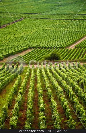 Vineyards in Gevrey chambertin burgundy France stock photo, Vineyards in Gevrey chambertin burgundy France by Christophe Rolland