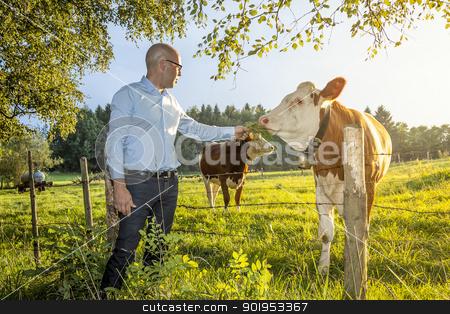 man feeds cow stock photo, An image of a man feeding a cow by Markus Gann