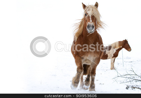 Horse in snow stock photo, A running horse in a snowy landscape by Christophe Rolland