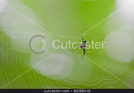 spider stock photo, Spider webs in the tropical rain forest. by chatchai